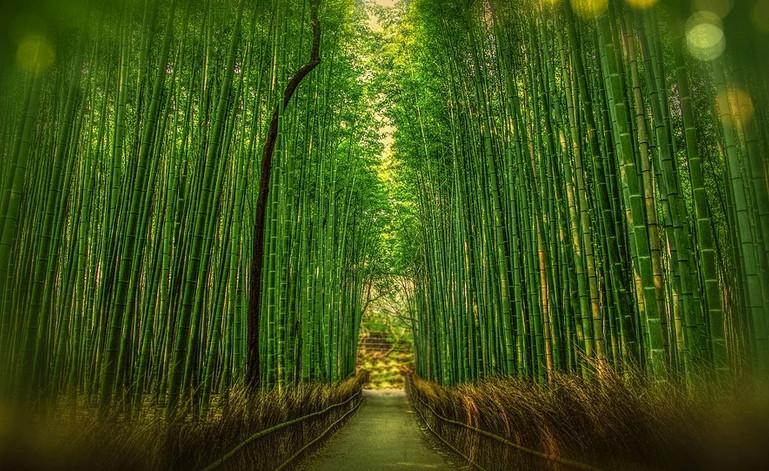 Avantages du bambou